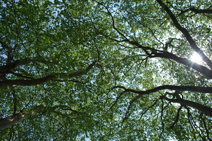 Trees in East London